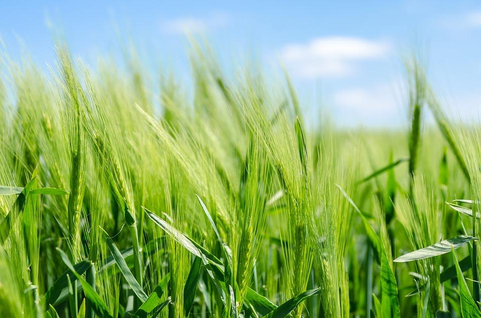 biopreparaty dla rolników i działkowców