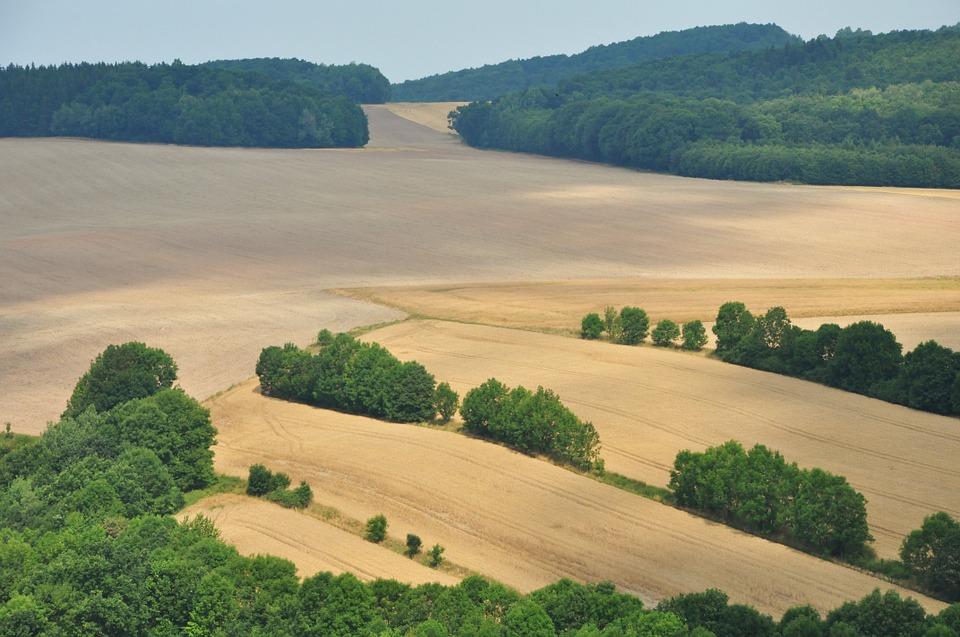 Obecność mikroorganizmów w glebie ma podstawowe znaczenie dla uprawy roślin